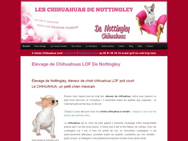 Elevage de chihuahuas de Nottingley